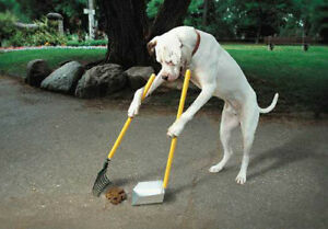 Pet Waste Clean up and removal: Call of Doodie
