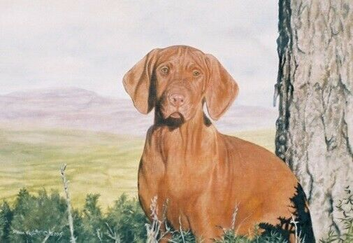 Vizsla Limited Edition Art Print A Frozen Moment by Steven Nesbitt*