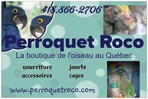 Perroquet Roco-La boutique de l'oiseau au Québec