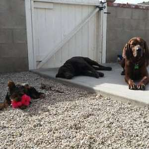 Affordable and Reliable Dog Walking & Pet Sitting Services Windsor Region Ontario image 4