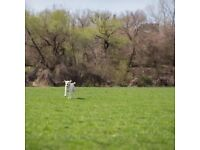 Wanted small field or enclosure for dog exercise