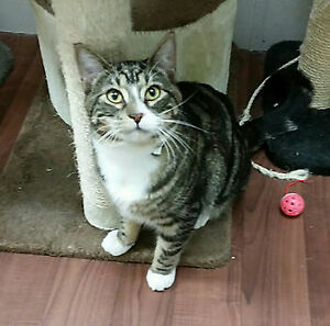 Beautiful Purrfect Pal Rescue Kitties - Adoption Fee Waived!