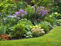 Looking for garden and weeding services