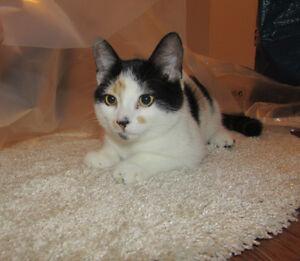 Coquine jolie petite chatte, affectueuse et attachante.