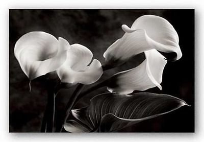 Calla Lily Garden Art - FLORAL ART PRINT Calla Lily Sondra Wampler
