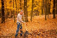 Lawn Leaves Trees Snow Removal Landscaping