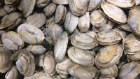 Seeking soft shell clams for purchase