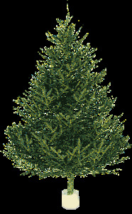 Looking for 4-6 ft spruce trees to buy