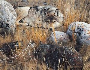 One To One Gray Wolf - Carl Brenders