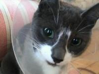 Stolen Cat Sold Here on Gumtree