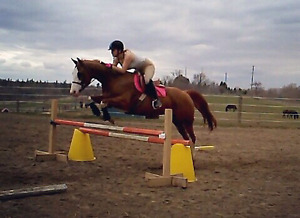 10 year old mare for part board