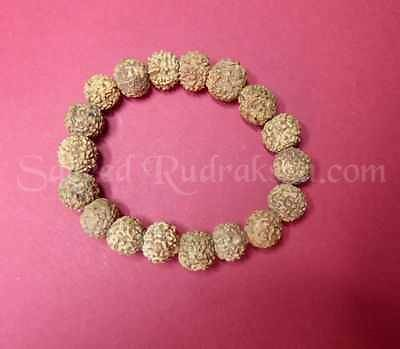 RUDRAKSHA beads and malas, largest collection