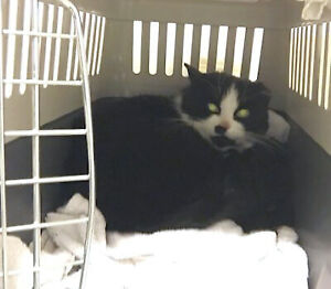 URGENT! Foster Family Needed for Oreo and Her Kittens!