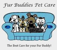 Kensington and Area Dog Walking and Pet Sitting