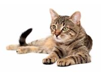CAT-FRIENDLY LANDLORD WANTED -