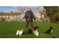Dog walking, boarding, puppy service in Dagenham, Barking. CRB checked, NarpsUK.