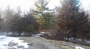 Picturesque well treed 4 acre property - Tweed, ON