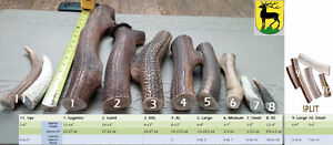 Fresh antler dog chews (Best price, best quality)
