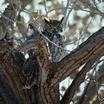 Crazy Owl s Treehouse