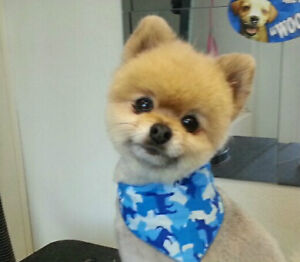 Mobile Dog Grooming Regina Regina Area image 3