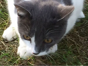 Missing Cat (Sully)