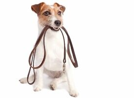 Cleaning and/or Dog Walking Offered