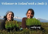 Reforestation in the heart of the Golden Circle, Iceland