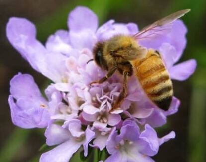 Bees Relocation All Perth Areas (Duty of Care)  South Perth South Perth Area Preview