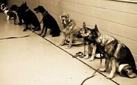 GROUP DOG OBEDIENCE CLASSES