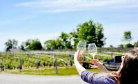 Amateur/Professional Photographer for Winery Tour