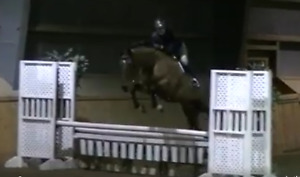 Show horse for co board