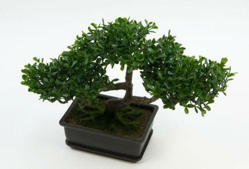 K nstlicher bonsai ebay for Bonsai versand