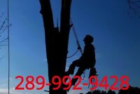 Stump & Tree removal all GTA 289-992-9428.