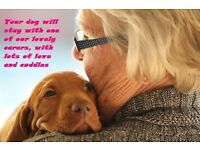PetStay home boarding service - a loving and caring alternative to kennels