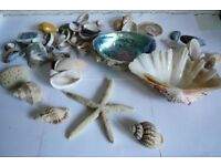 shells for aquarium, fish tank