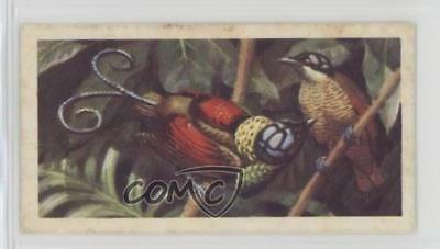 1961 Brooke Bond Tropical Birds Tea Base #50 Wilson's Bird of Paradise Card 2u1