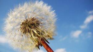 weedkiller herbicide concentré comme kilex pour mauvais herbes