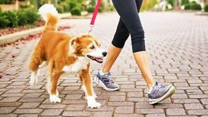 Affordable and Lovable Pet Care