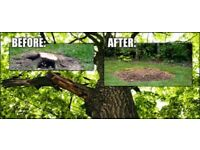 Tree Stump Removal Services Professional Stump Grinding Midlands