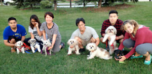 Small Dogs Outings Group - Free Membership