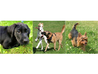 Established, caring dog walker - the best dog walks and puppy visits locally
