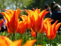 Save 30-75% Perennial & Fall Bulb Blowout