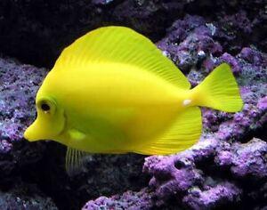 Wtb tropical fish Moree Moree Plains Preview