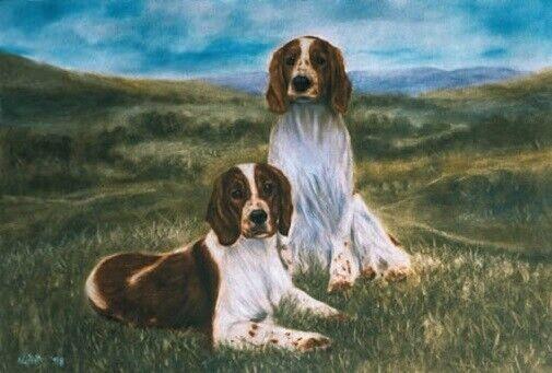 Welsh Springer Spaniel Limited Edition Art Print In The Country Steven Nesbitt*