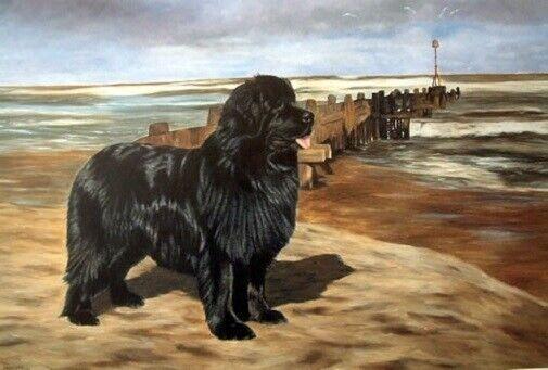 Newfoundland Dog Newf Limited Edition Art Print Beach Patrol by Steven Nesbitt*