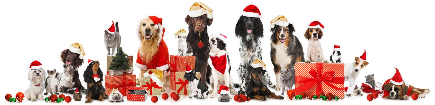 Happy Hugo - für Hund & Halter