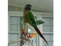LOOK! Baby Conure Parrots