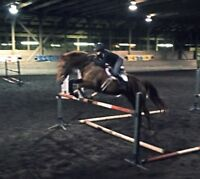 Lovely 17.1hh Dutch Warmblood for Lease