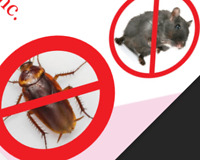 MICE/Rats, Cockroaches, Bedbugs,, Ants, Wasps, Call 647-956-5868