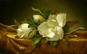 Magnolias on Gold Velvet Cloth Print - Martin Johnson Heade 1888